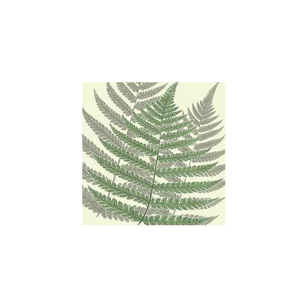 Bregne by Dims - Gennemsigtig flisesticker 15x15 cm
