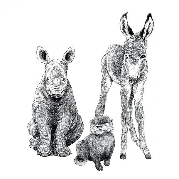 3 dyreunger - Gennemsigtig sticker 15x15 cm