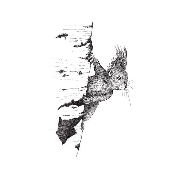 Egern - Gennemsigtig sticker 15x15 cm