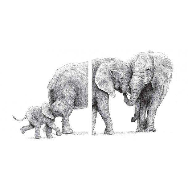 Elefantfamilie - Gennemsigtig folie - 2 stk á 15x15 cm