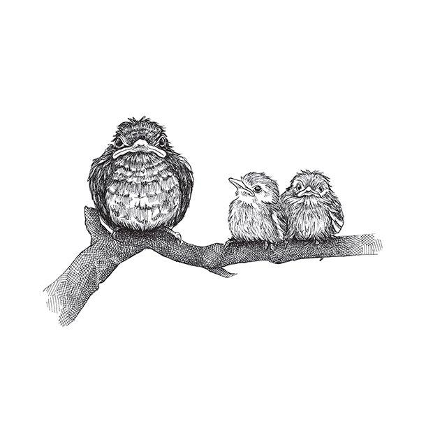 Finurlige Fugle - Gennemsigtig sticker 15x15 cm