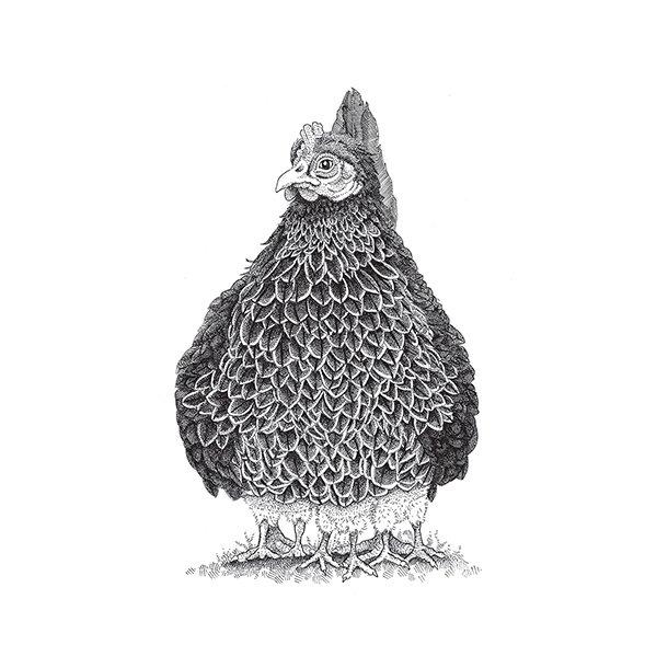 Henne - Durchsichtiger Fliesenaufkleber  15x15 cm