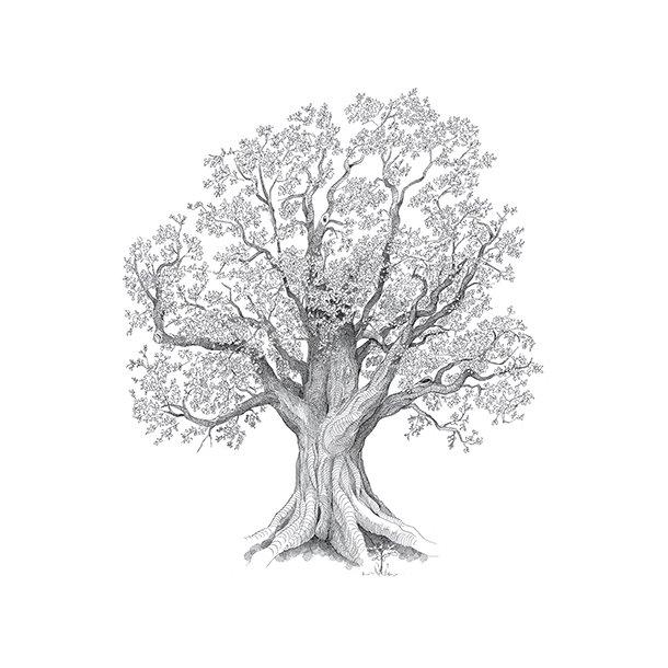 Livets træ - Gennemsigtig sticker 15x15 cm
