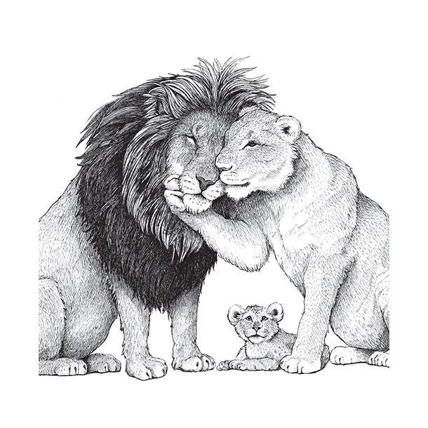 Løvefamilie - Gennemsigtig sticker 15x15 cm