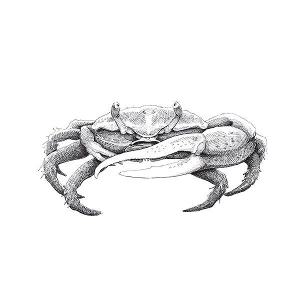 Krabbe - Durchsichtiger Fliesenaufkleber 15x15 cm