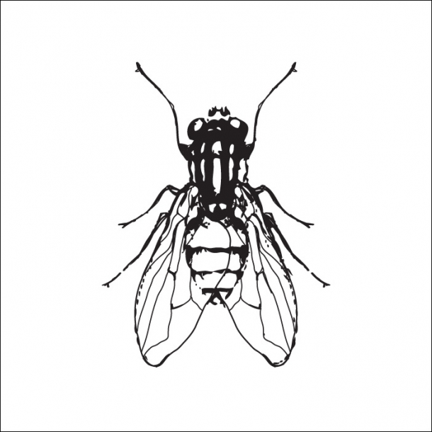 Flue - Sort - Gennemsigtig sticker 15x15 cm